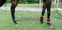Boot Front Leg and Hindleg